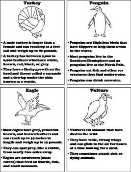Types of Birds Activity: Interactive Notebook Foldable/ Coloring Book