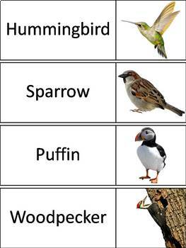Types of Birds Word Wall Cards