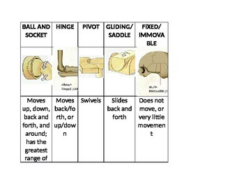 Types of Body Joints Graphic Organizer/Sort
