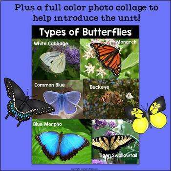 Types of Butterflies Mini Book for Early Readers