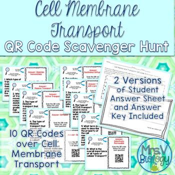 Types of Cellular Transport QR Code Scavenger Hunt