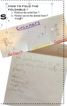 Types of Consumers Foldable
