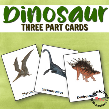 Types of Dinosaurs 3 Part Cards