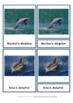Types of Dolphins Montessori 3 Part Cards