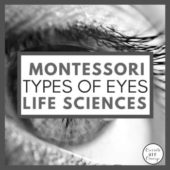 Types of Eyes Montessori Cards
