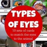 Montessori 3 Part Cards - Types of Eyes