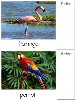 Types of Feathers-Matching Game