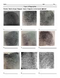 Types of Fingerprints Worksheet