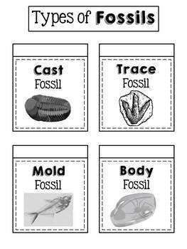 Fossils Interactive Notebook Activity
