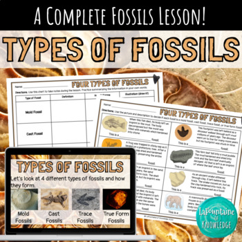 Types of Fossils Lesson - PowerPoint, Notes, Worksheet, and Answer Key!