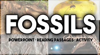 Types of Fossils Package