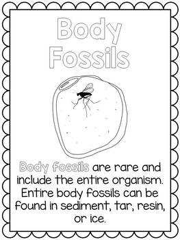 Types of Fossils Posters