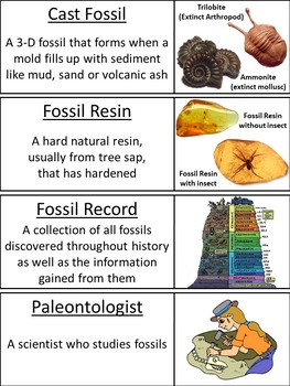 Types of Fossils Word Wall Cards