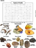 Types of Fossils Worksheet/ Word Search