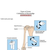 Types of Joints Worksheets