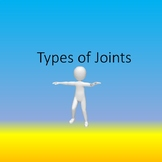 Types of Joints in the Human Skeleton