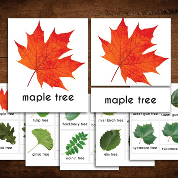 Types of Leaves - Montessori 3 part cards