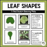 Types of Leaves | Nature Curriculum in Cards | Montessori