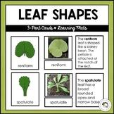 Leaf Shapes | Nature Curriculum in Cards | Montessori