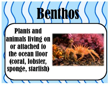 Types of Marine Organisms Vocabulary Word Wall