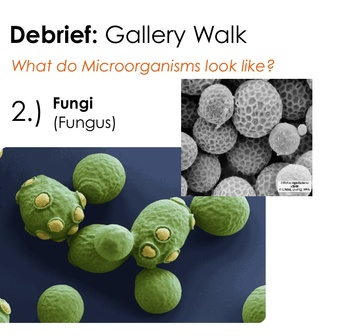 Types of Microorganisms - Introductory Lesson