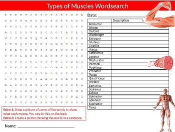 Types of Muscles Wordsearch Sheet Starter Activity Keywords Sports Biology