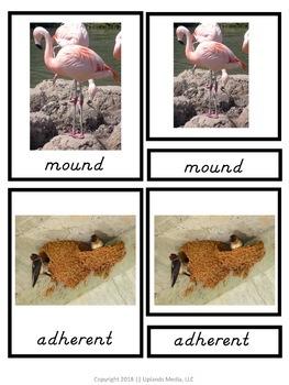 Types of Nests Montessori 3 Part Cards