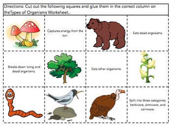Consumers, Producers and Decomposers Venn Diagram Worksheet /