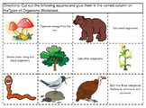 Types of Organisms Sort (Producers, Consumers, Decomposers
