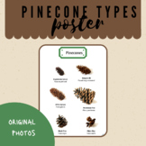 Pinecones - Different Types - Montessori /Outdoor classroom, poster (8in X11in )