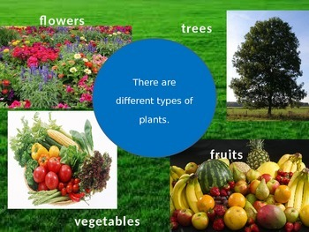 Types of Plants Powerpoint