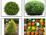 Types of Plants Sort
