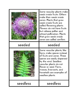 Types of Plants - Three Part Cards