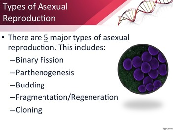 Types of Reproduction--Sexual and Asexual
