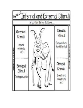 Types of Stimuli