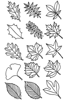 Leaf Clipart Types Of Tree Leaves Line Drawings By Not Your Average