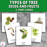 Types of Tree Seeds and Fruits Montessori 3-part cards