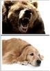 Types of animals. WHITE background + flashcards