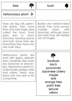 Types of plants sorting cards (tree, bush, herbaceous plant)