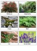 Types of plants sorting cards (tree, bush, herbaceous plant) Level 2