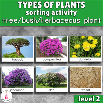 Types of plants sorting cards tree bush herbaceous for Different kinds of plants