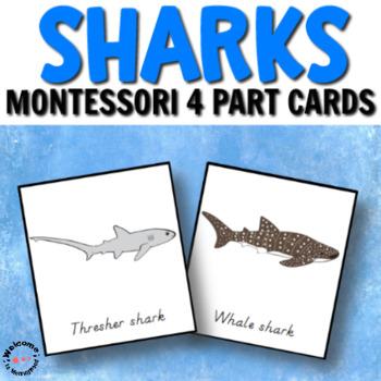 Types of sharks Montessori cards