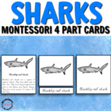 Types of sharks Montessori cards