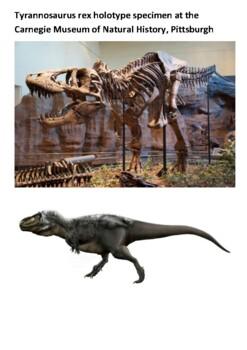 Tyrannosaurus rex Handout