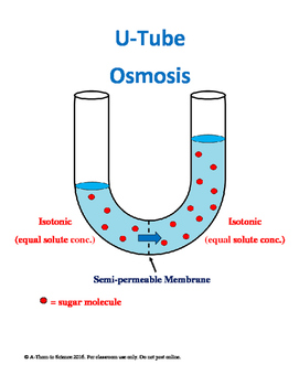 U-Tube Osmosis Diagrams for Teaching