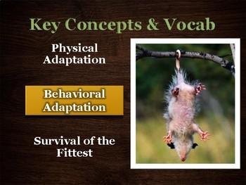U14 D05 - Animal Adaptations (Variation and Adaptation unit)