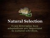 U14 D07 - Natural Selection Lab Game (Variation and Adapta