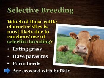U14 D08 - Selective Breeding (Variation and Adaptation unit)