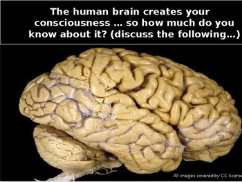Parts Of The Brain And What They Do Gcse - Aflam-Neeeak