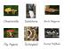 UK Fungus Montessori 3-Part Cards